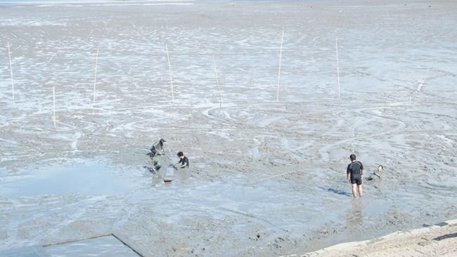 鹿島市干潟あそび