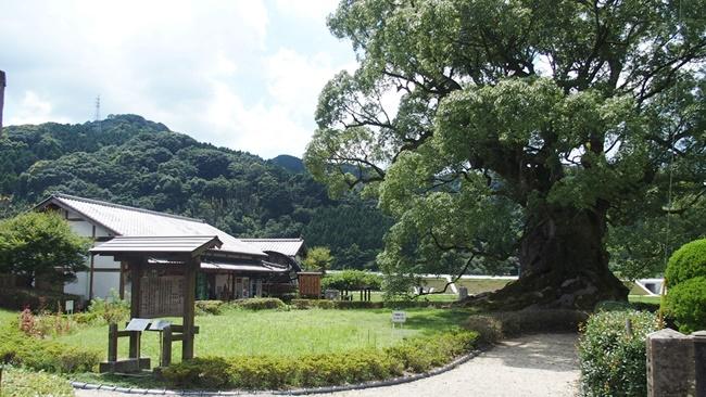 「川古の大楠」樹齢3000年の巨木の存在感が圧巻!佐賀武雄にあるパワースポット
