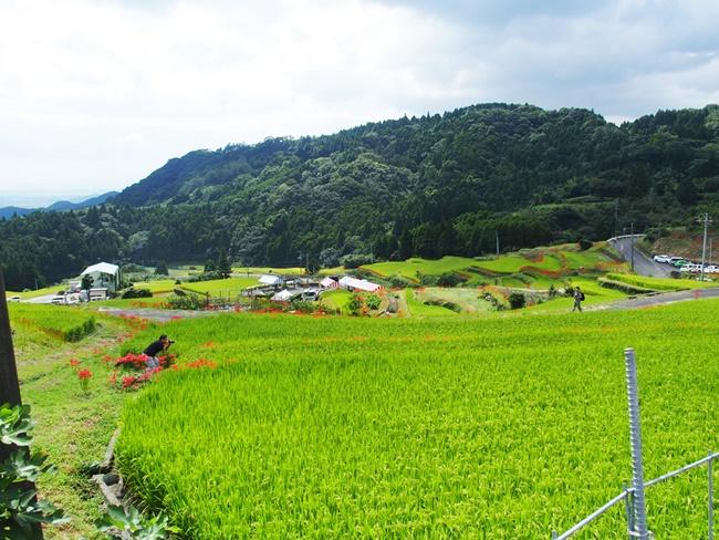 江里山の棚田1
