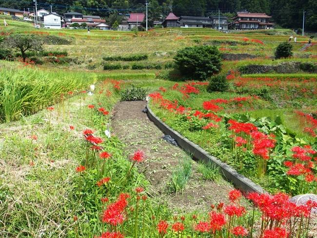 江里山の棚田3