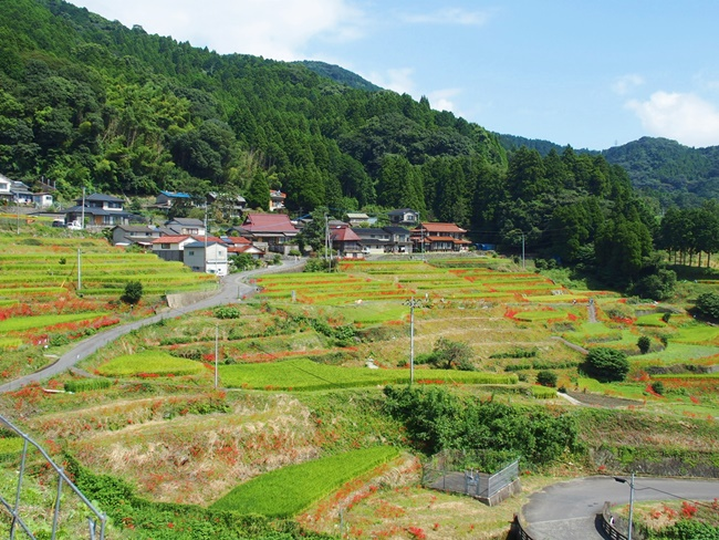 江里山の棚田2