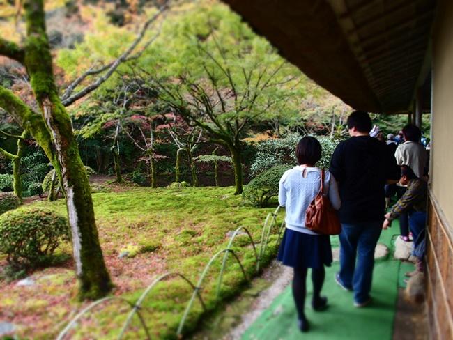 「九年庵の秋」春と秋の年に二回だけ一般公開される『九年庵』秋の紅葉に行ってきました。