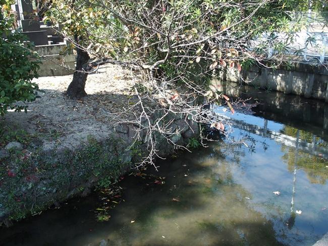 水ヶ江城石積み