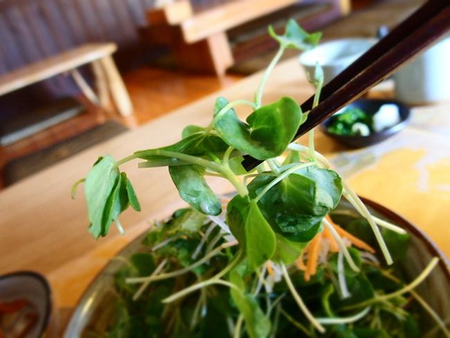 木漏れ陽そばの芽サラダアップ