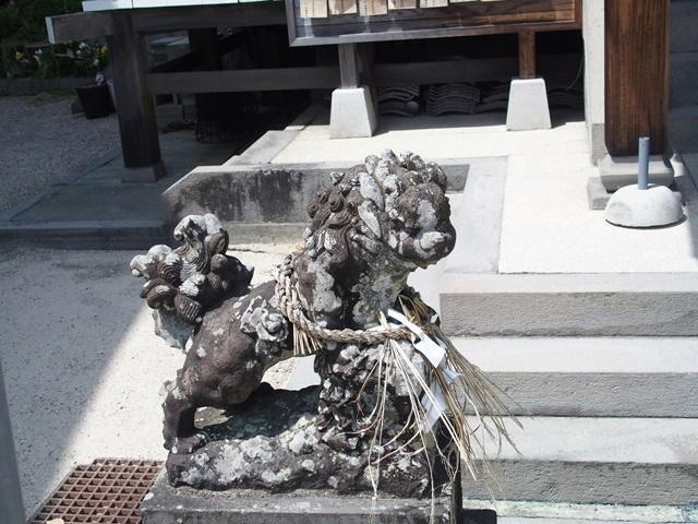 伊勢神社肥前狛犬4