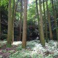 佐賀伊万里焼の里「大川内山の御用登窯跡」はココだ!金仙窯で資料館になってます。