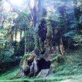 「武雄の大楠」樹齢3000年の巨木!むすびの檜!『武雄神社』パワースポットだわ。