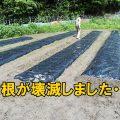 週末農業なんて無理じゃん!未経験者が新規就農で有機無農薬栽培をやってみた結果
