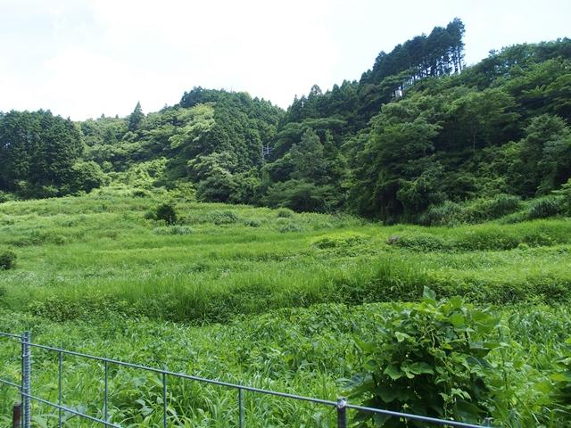 草刈1707131