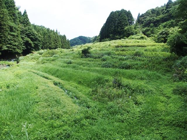 草刈1707135