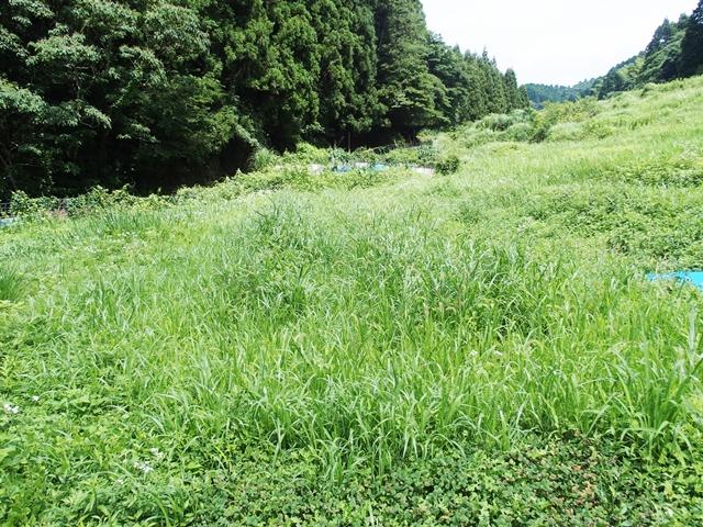 草刈1707133
