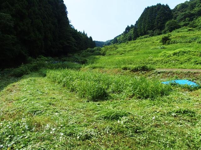 草刈1707138