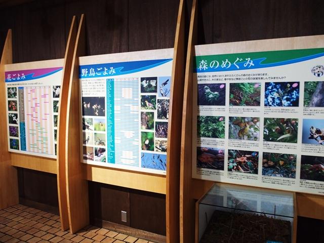 森林学習館15